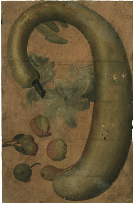 Castello Sforzesco Milano mostra - Scuola emiliana - Zucca Lagenaria ricurva, con gigli, pesche e pere